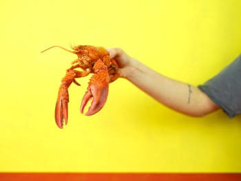 A man holding a live lobster on a yellow background